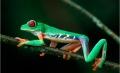 """Vorschlag für eine """"Selfdrive Rundreise Costa Rica"""""""